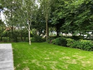 7-7-20 foto 10 W'Erf nieuw ingezaaid gras zijkant